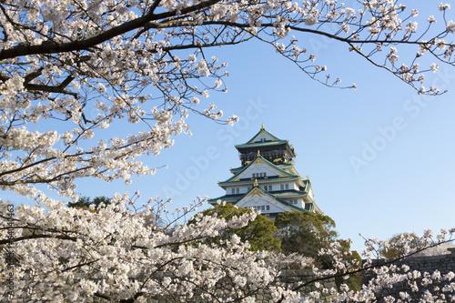 Naklejka 大阪城 と 桜