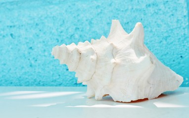 conch shell and starfish summer backgound