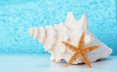 conch shell and starfish summer background