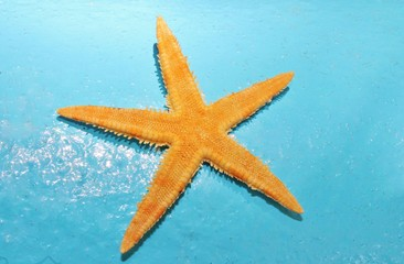 orange starfish against aqua blue background