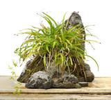 Rock bonsai isolated on white