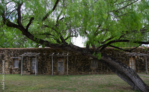 Walls, doors and Anacua trees in mission San Jose, Texas