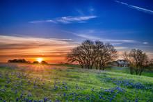 "Постер, картина, фотообои ""Texas bluebonnet wildflower spring field at sunrise"""