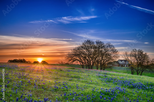 Fotobehang Platteland Texas bluebonnet wildflower spring field at sunrise