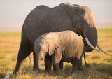 An African elephant mother and a baby elephant, Kenya