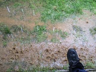 Aşırı yağış