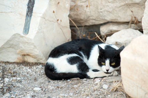 Greek cat resting in the ruins of Acropolis, Athens
