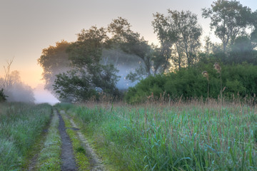 Path through wild vegetation and mist