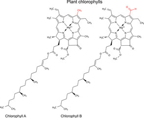 Structural chemical formulas of plant pigments chlorophylls