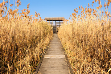 Access to the watchtower for bird watching