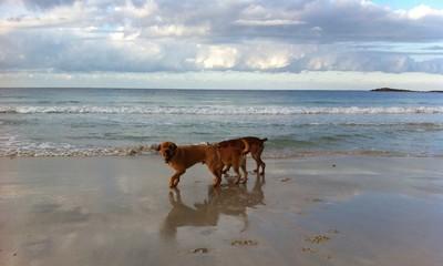 trio de perros en la playa
