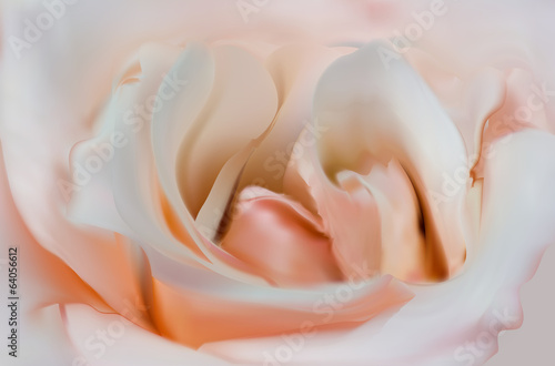 light pink rose flower center illustration
