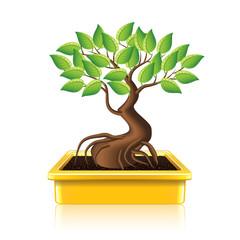 Bonsai tree vector illustration