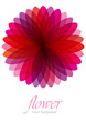 vector background with pink transparent flower