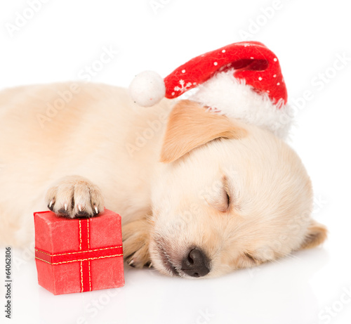 golden retriever puppy dog with gift and santa hat. isolated