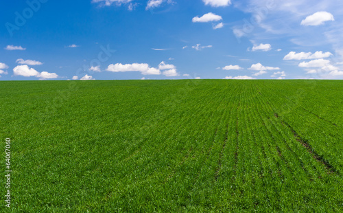 Ukrainian spring landscape with winter crops and sky