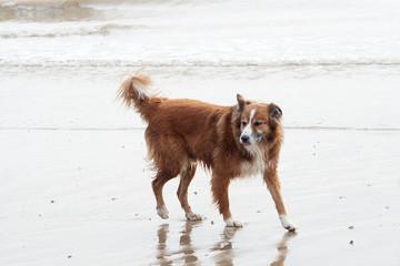 Shaggy wet dog on beach