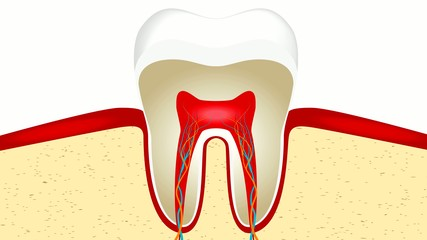 UltraHD (4k) video animation of crop of tooth