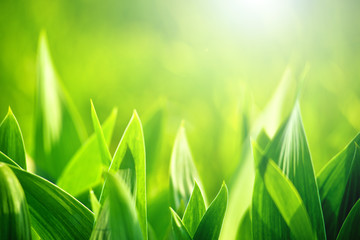 Fresh green grass as spring season background © Bits and Splits