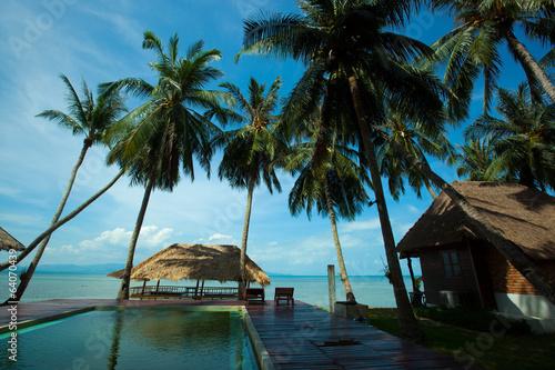 beach and coconut tree in Koh Phangan Thailand - 64070439