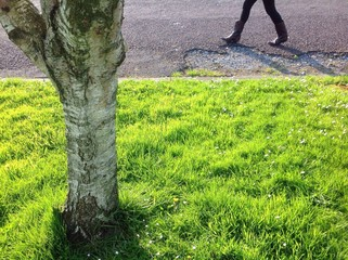 walking by grass and tree