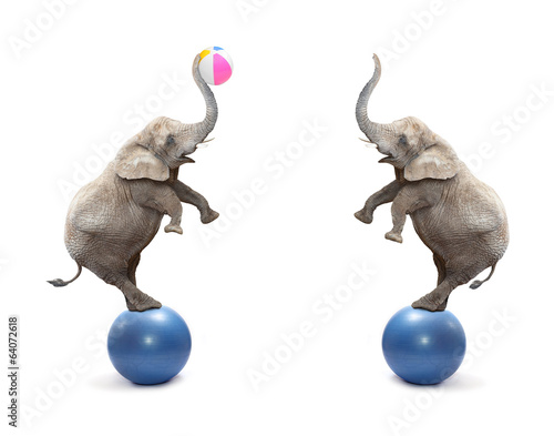 Two funny elephants playing with ball.