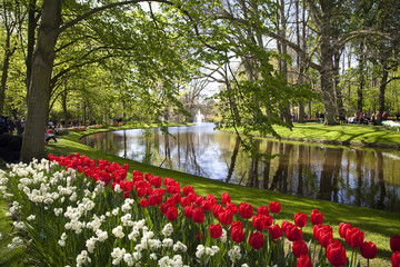 Red tulips near the pond in Keukenhof