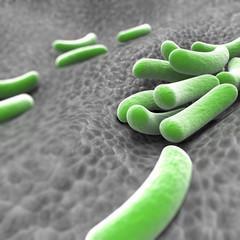 Microscopic view of bacteria