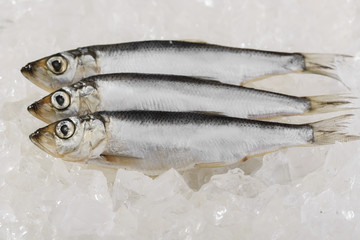 herring on ice