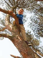 young boy  tree climbing