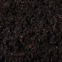 Black ground close up