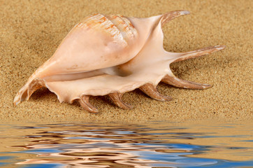 The sea shell in the sand