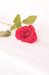 Single red rose on the bed