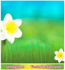 Frühlingswiese mit Osterglocken
