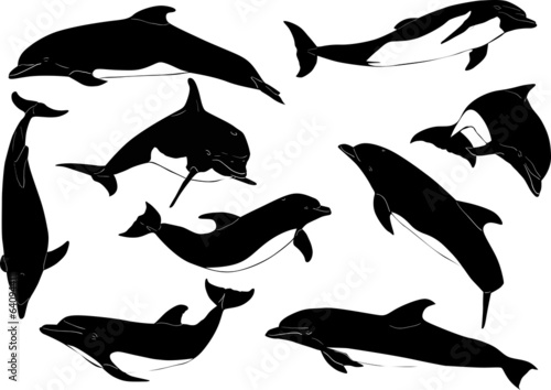 nine dolphins isolated on white