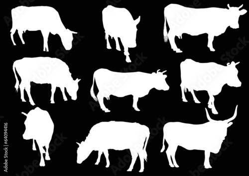 nine cows silhouettes isolated on black