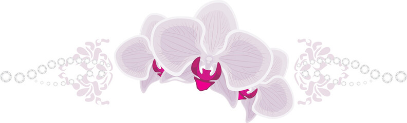 Orchid flowers isolated on the white