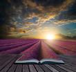 Book concept Vibrant Summer sunset over lavender field landscape