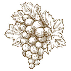 engraving grapes and leaf on the branch