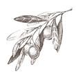 olive branch - 64104000