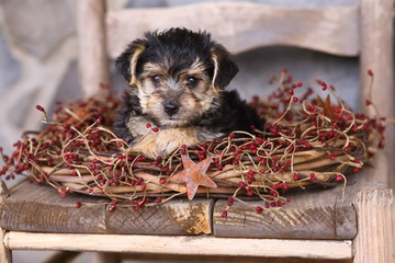 Adorable Little Puppy with Rustic Wreath