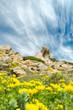 Sardegna, primavera in Gallura