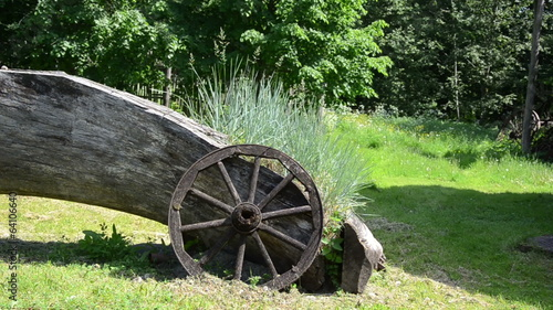 old lying stem growing green sedges old wooden carriage wheel