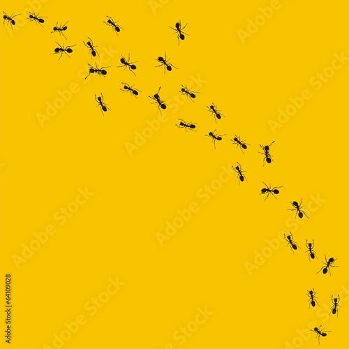 Ants - 64109028