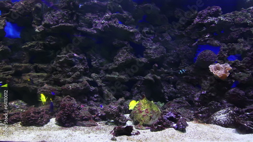 A large aquarium and the little coral fish