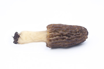 Morel mushroom isolated on white background
