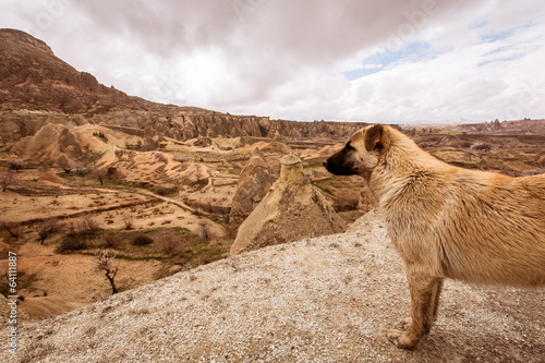 A Dog with the cappadocia skyline
