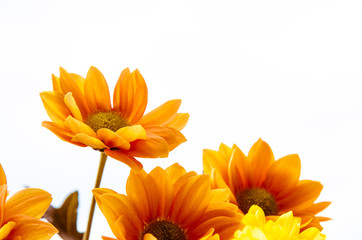 yellow orange flowers