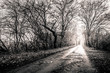Black and white photo of a road surrounded my trees with light a