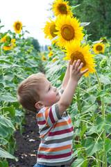 Little boy with sunflower